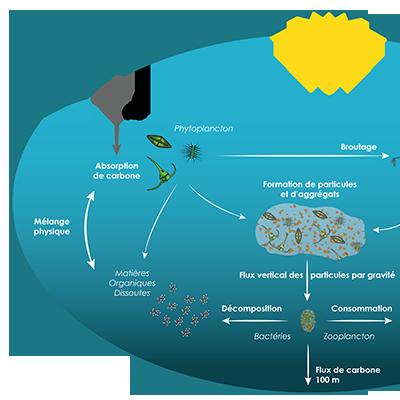 Schéma de la pompe biologique